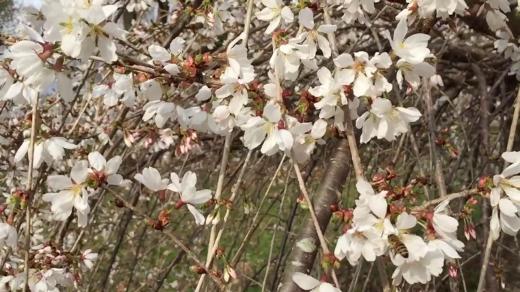 vlcsnap-2015-03-25-16h16m43s121